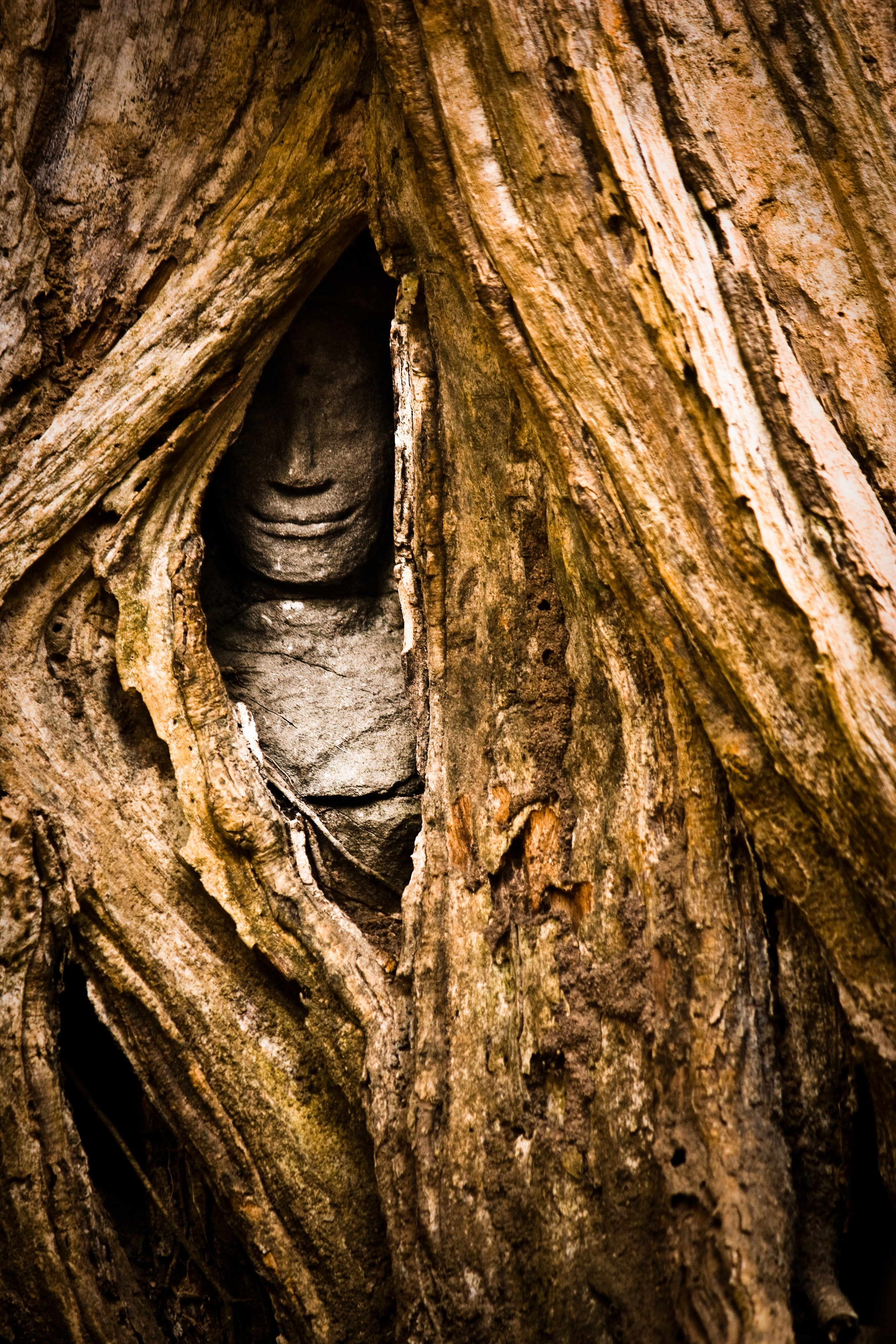 Face in Tree at Ta Prohm Temple
