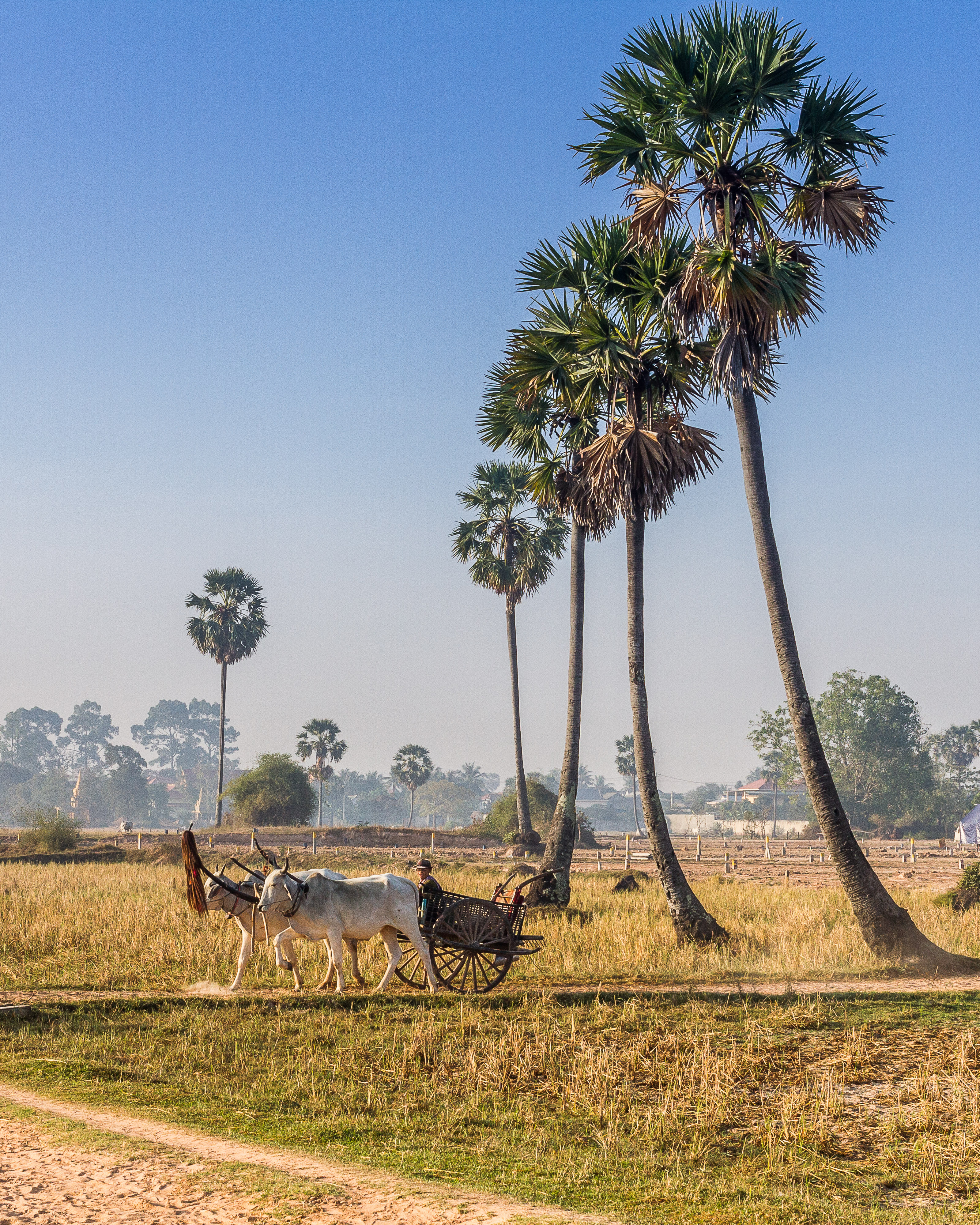 Cambodian Ox Cart in the Province